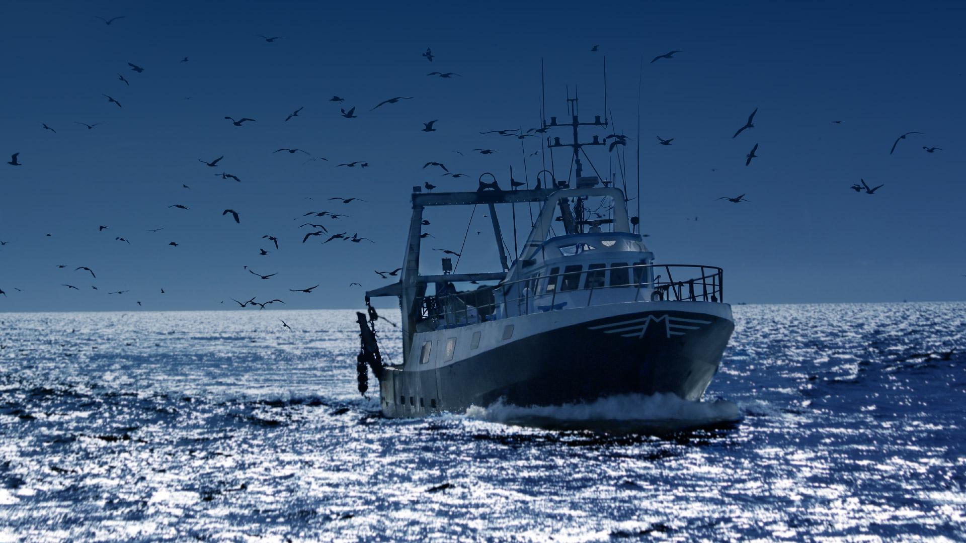 Bateaux professionnels maritimes